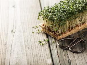 Rzeżucha - poprawia przemianę materii, dobrze ...