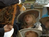 Bez pszczół nie ma życia…