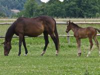 Chcą wysyłać żywe polskie konie do japońskich rzeźni