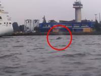 Wieloryb u wybrzeży Bałtyku