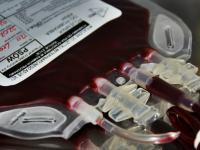 Bank krwi dla zwierząt. Czy pies może być dawcą krwi?