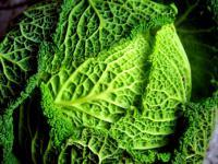 Dieta kapuściana: czy jedząc kapustę można schudnąć?