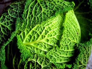 Dieta kapuściana - czy jedząc kapustę można schudnąć?
