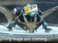Robo-chrząszcz do zadań specjalnych
