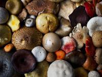 Jak postępować w przypadku zatrucia grzybami?