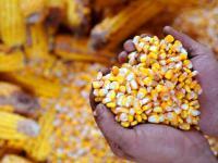W Afryce powstają Farmy Przyszłości