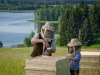 Pierzga pszczela – najbardziej wartościowy naturalny produkt na świecie