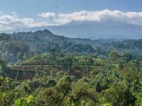 Jak zatrzymać wycinkę lasów u podnóża Kilimandżaro?