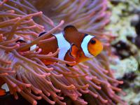 Ryby, które śpiewają