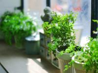 Rośliny doniczkowe, które oczyszczą powietrze z toksyn