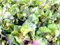 Kalerosse – nowość w polskim warzywniaku