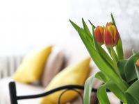 Najlepsze oczyszczacze powietrza do mieszkania