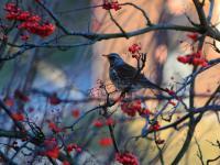 Wędrówki ptaków - ptaki, które migrują pod osłoną nocy