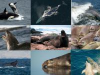 Ssaki, które opanowały oceany