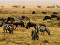 Przyrodolecznictwo w świecie zwierząt