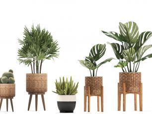 Jakie rośliny powinniśmy trzymać w sypialni?