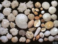 Zwierzęta, które zbudowały morskie dno