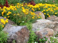 Ogród skalny (skalniak) – formowanie, budowa i sadzenie roślin w ogrodzie skalnym