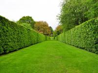 Rośliny na żywopłot ‒ jakie wybrać?