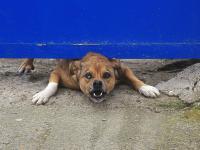Surowe kary za niedopilnowanie niebezpiecznych zwierząt
