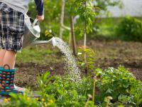 Podlewanie ogrodu – porady i zasady podlewania roślin ogrodowych