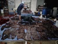 Wieloryb umierał w męczarniach. W jego brzuchu znaleziono 80 plastikowych torebek