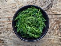 Koperek – aromatyczny lek na problemy gastryczne