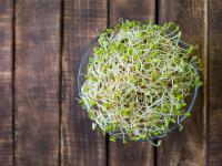 Kiełki lucerny – właściwości i wartości odżywcze. Jak wyhodować kiełki lucerny?