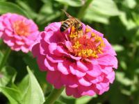 Fascynujące pszczoły! Poznaj grę karcianą