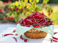 Papryka chili warzywo – właściwości, wartości odżywcze i zastosowanie papryki chili