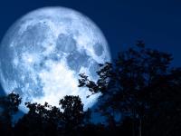 Wpływ Księżyca na rośliny - kiedy siać, przesadzać i zbierać?