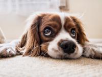 Czy zdrowe karmienie psa jest możliwe? Zobacz, co musi się znaleźć w codziennej diecie czworonoga
