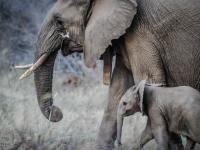 Masakra słoni na niespotykaną skalę