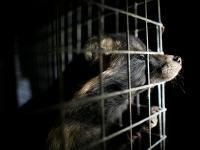Wielka demonstracja w obronie praw zwierząt!