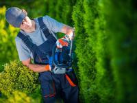 Jesienne cięcie krzewów – kiedy i jak przycinać krzewy ogrodowe?