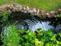 Jakie rośliny do stawu i oczka wodnego?