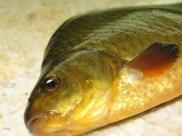 znalezienie randki online z rybami