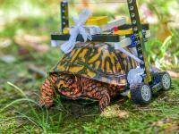 Lekarze stworzyli mini-wózek inwalidzki dla rannego żółwia