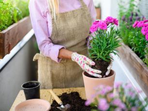Kwiaty na balkon i taras – jakie rośliny wybrać?