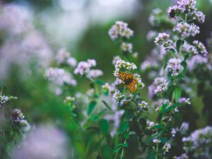 Zioła w ogrodzie – jakie gatunki wybierać?