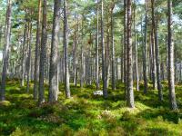 Tanie i proste sposoby na globalne ocieplenie