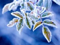 Rośliny wrażliwe na zimno. Jak chronić rośliny przed przymrozkami?