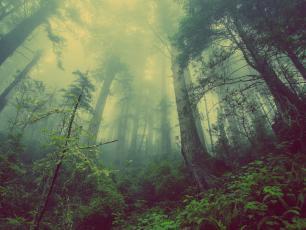 COP24: Lasy Państwowe są w stanie pochłonąć 42 mln ton CO2 rocznie