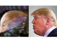 Ślepy płaz nazwany na cześć Donalda Trumpa