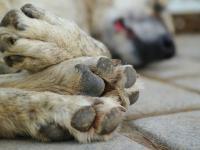W Rosji przyjęto ustawę o ochronie zwierząt