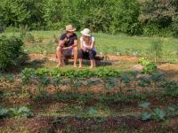 Ogród permakulturowy – zasady, aranżacja i korzyści wynikające z ogrodu permakulturowego