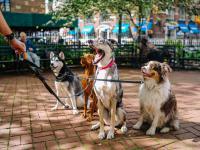 Psy będą jeść owady, by chronić środowisko