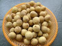 Słodliwka pospolita owoc – właściwości, witaminy i wartości odżywcze słodliwki pospolitej