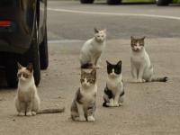 Koty zabijają miliony zwierząt rocznie