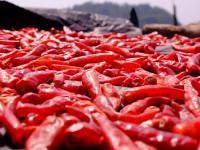 Papryka piri-piri warzywo ‒ właściwości, witaminy i wartości odżywcze papryki piri-piri